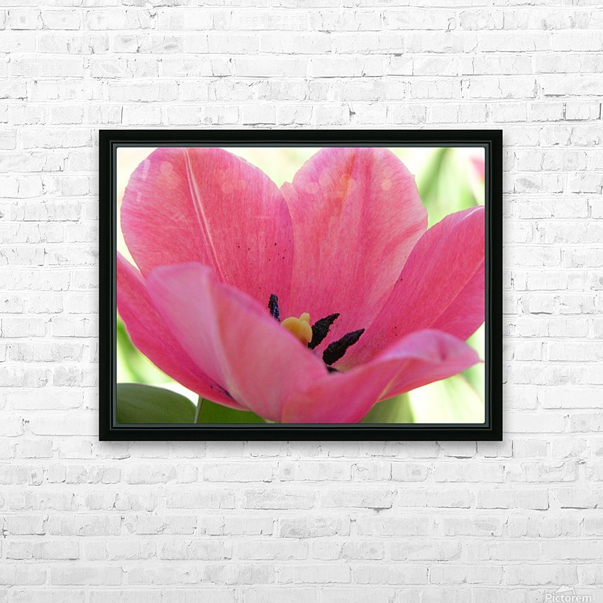 Beautiful Pink Tulip Photograph HD Sublimation Metal print with Decorating Float Frame (BOX)
