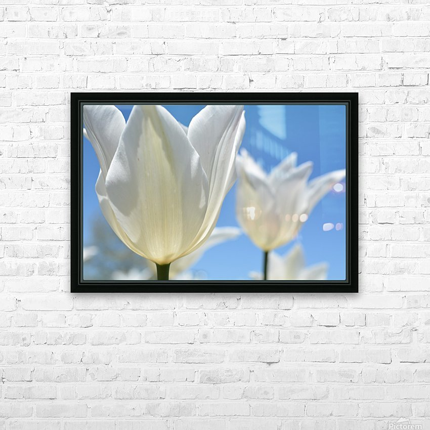 White Tulip Photograph HD Sublimation Metal print with Decorating Float Frame (BOX)