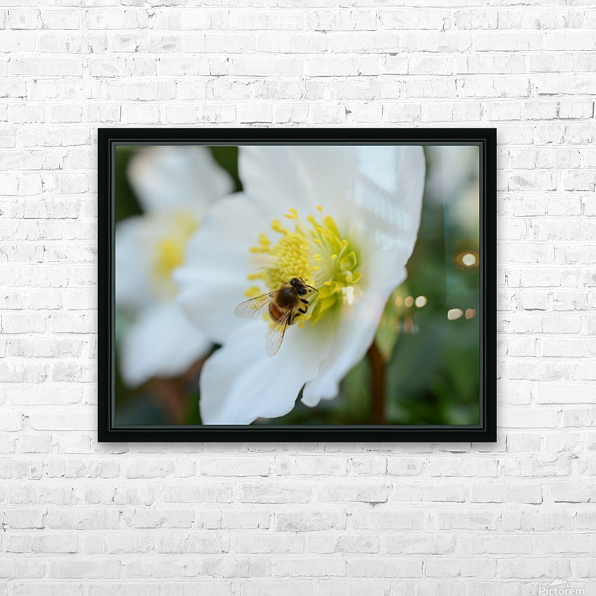 Bee On White Flower Photograph HD Sublimation Metal print with Decorating Float Frame (BOX)