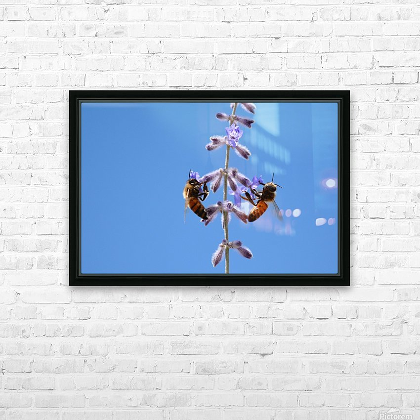 Two Bees On Vine Photograph HD Sublimation Metal print with Decorating Float Frame (BOX)