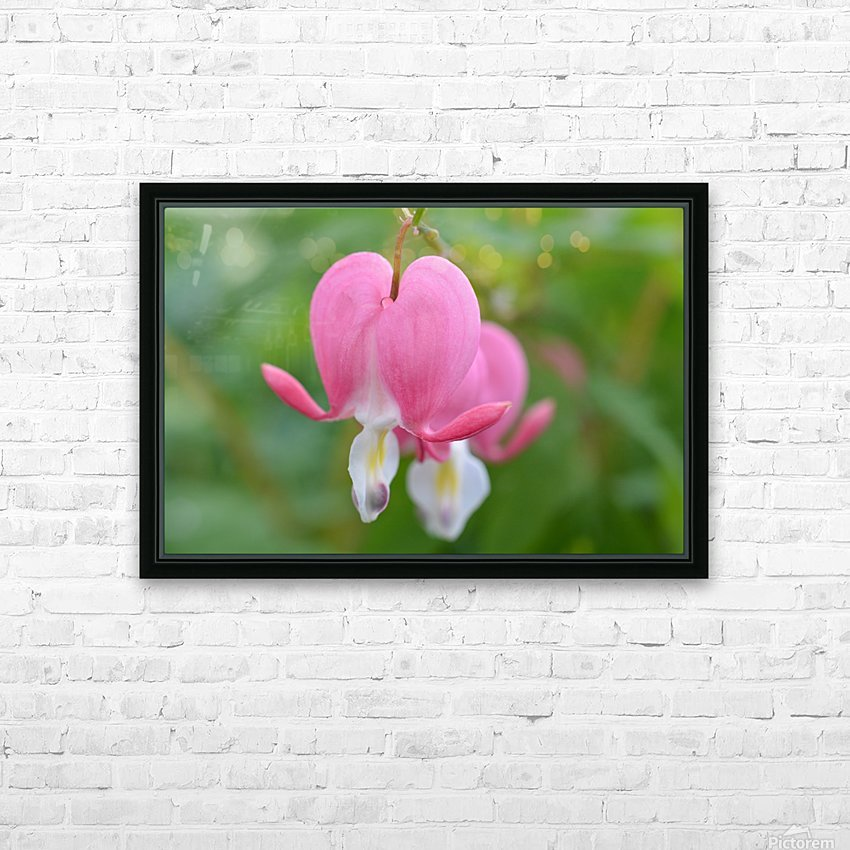 Bleeding Heart Flower Photograph HD Sublimation Metal print with Decorating Float Frame (BOX)
