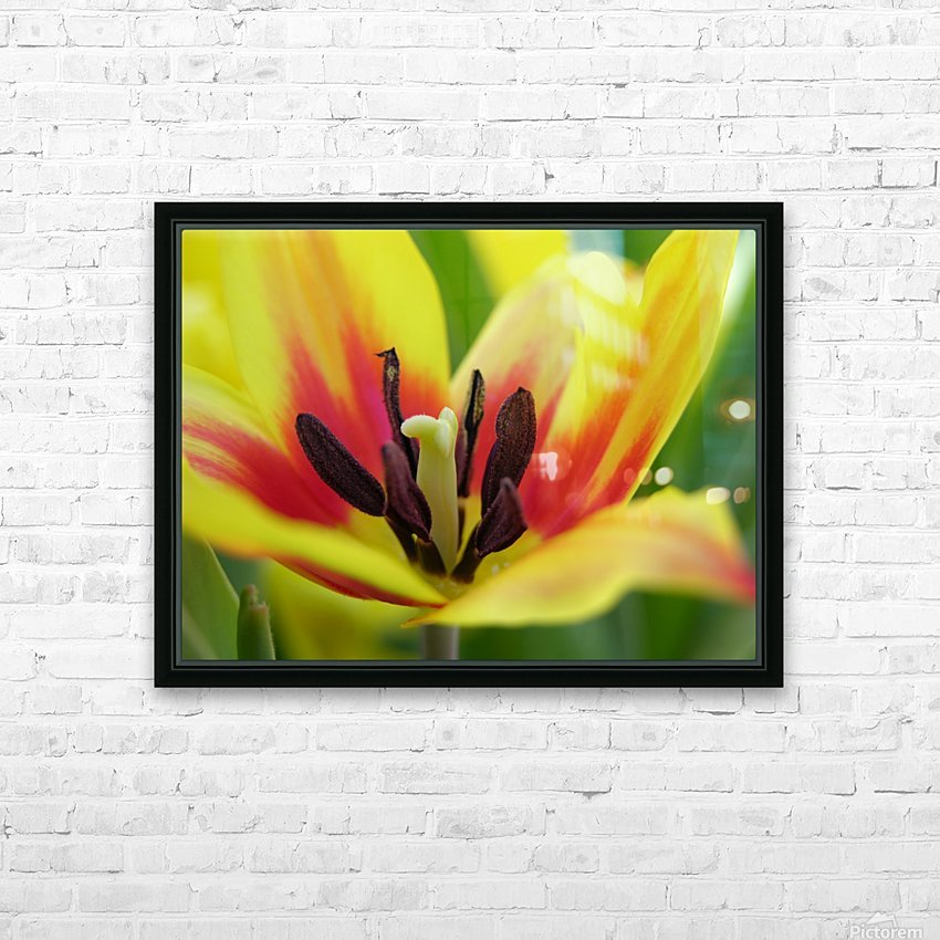 Yellow Tulip Photograph HD Sublimation Metal print with Decorating Float Frame (BOX)