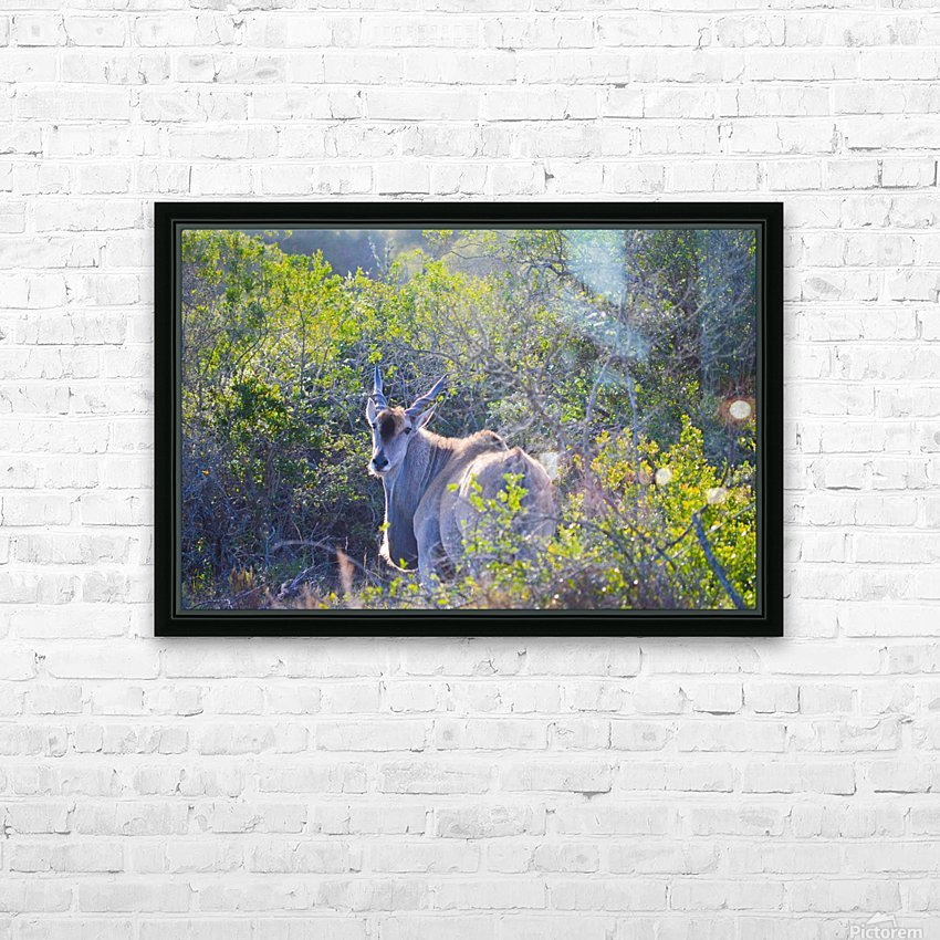 Deer Posing for Photo HD Sublimation Metal print with Decorating Float Frame (BOX)