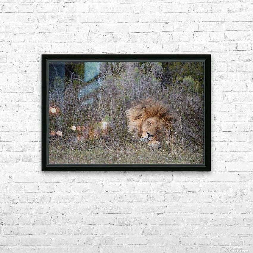The Lion Sleeps Tonight HD Sublimation Metal print with Decorating Float Frame (BOX)