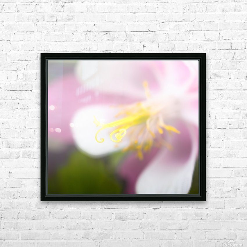 Sweet Columbine - Douce Ancolie HD Sublimation Metal print with Decorating Float Frame (BOX)