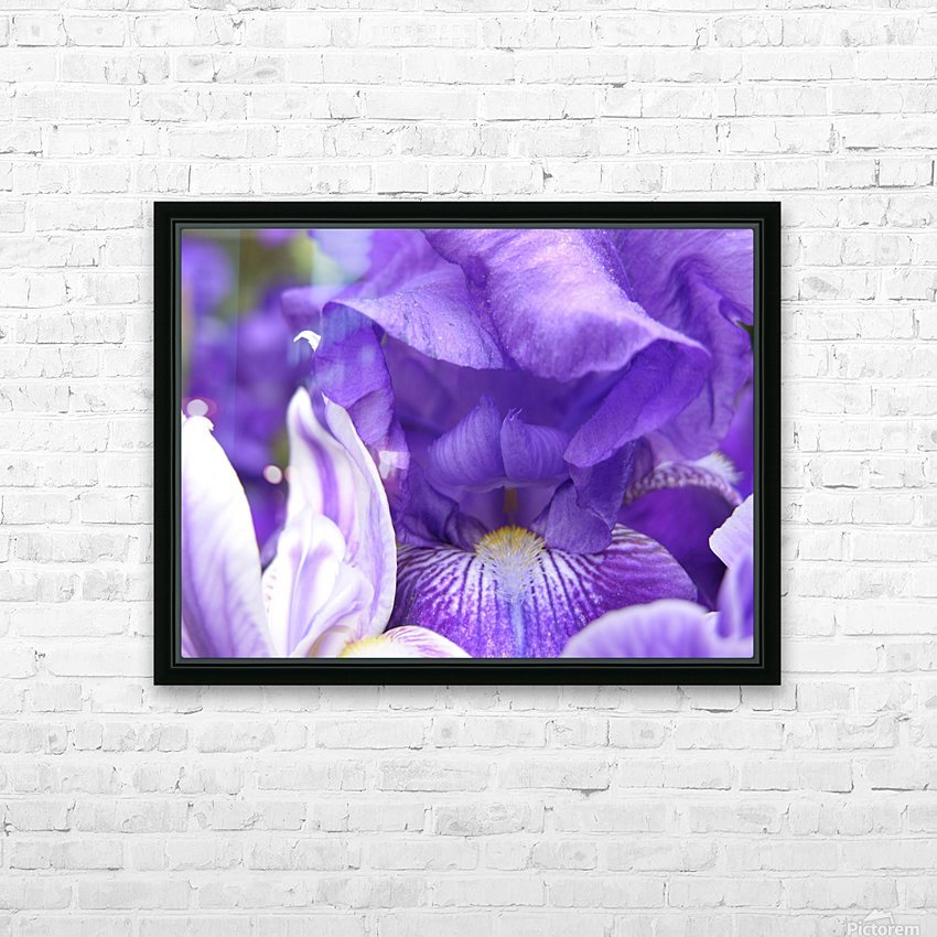 Blue Iris Photograph HD Sublimation Metal print with Decorating Float Frame (BOX)