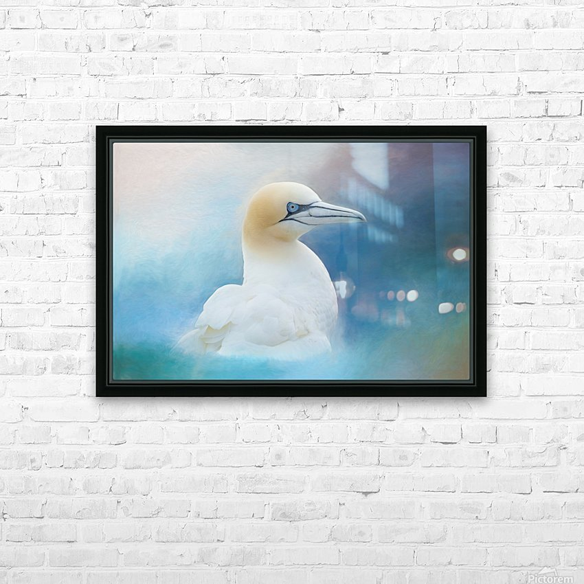 Northern Gannet ver2 HD Sublimation Metal print with Decorating Float Frame (BOX)