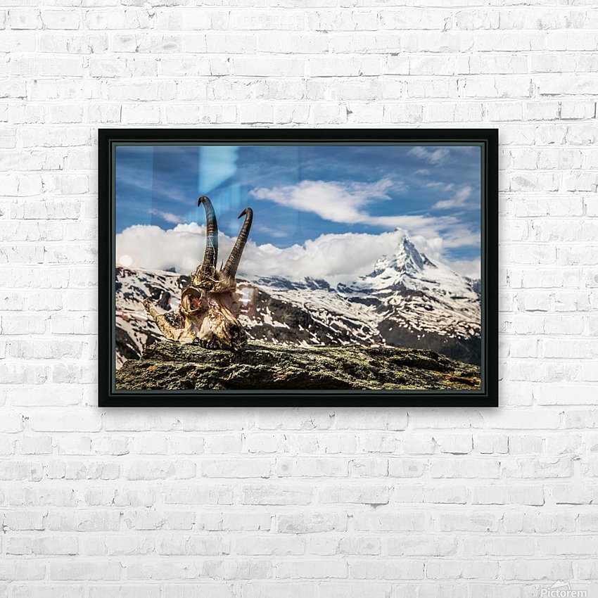 Horns Meet The Horn HD Sublimation Metal print with Decorating Float Frame (BOX)