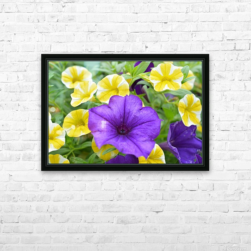 Beautiful Blue Flower In Yellow Flower Garden Photograph HD Sublimation Metal print with Decorating Float Frame (BOX)