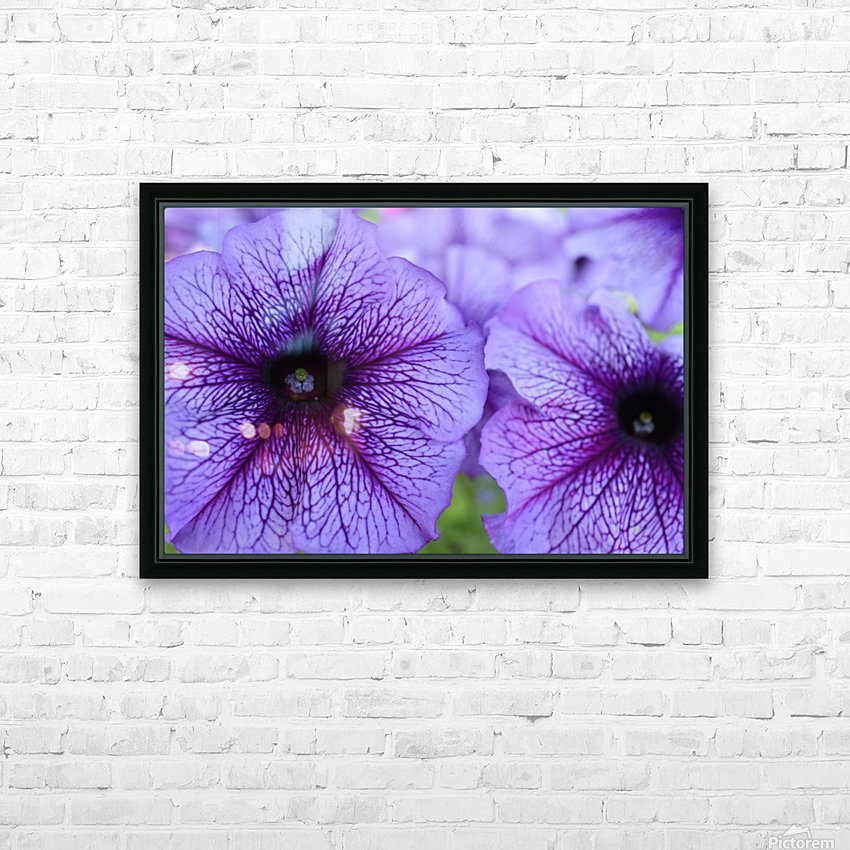 Purple Petunia Garden Photograph HD Sublimation Metal print with Decorating Float Frame (BOX)