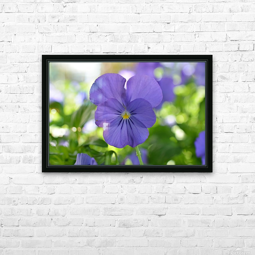 Blue Pansy Photograph HD Sublimation Metal print with Decorating Float Frame (BOX)