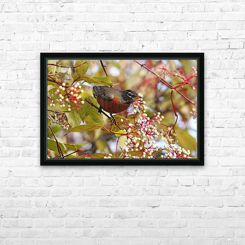 American Robin In Dogwood HD Sublimation Metal print with Decorating Float Frame (BOX)