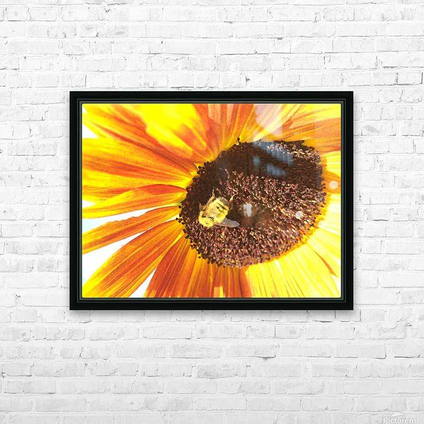 Bumblebee on Sunflower HD Sublimation Metal print with Decorating Float Frame (BOX)