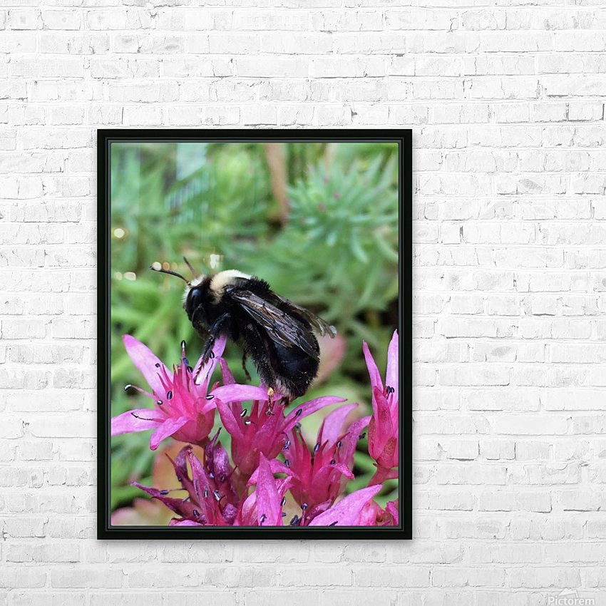 Black Bumble Bee HD Sublimation Metal print with Decorating Float Frame (BOX)