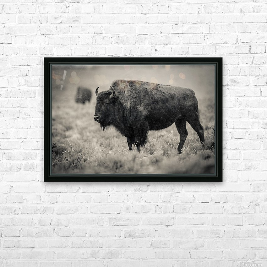 Bison of the Far West HD Sublimation Metal print with Decorating Float Frame (BOX)