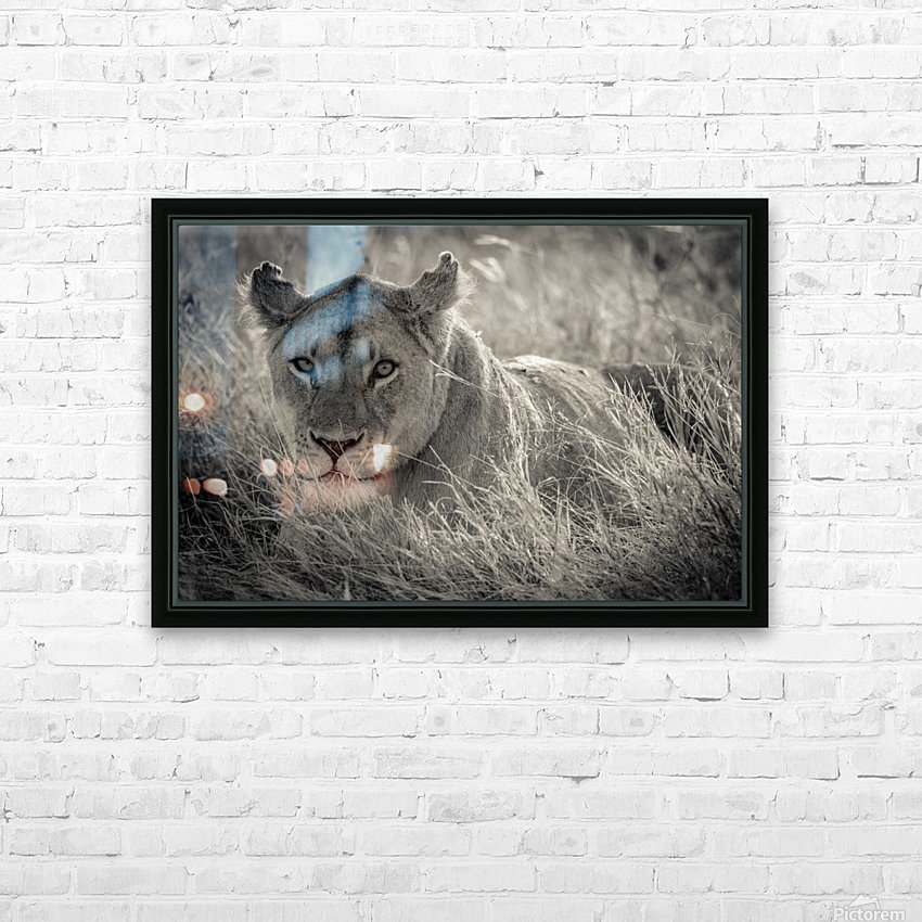 Lioness in the sun HD Sublimation Metal print with Decorating Float Frame (BOX)
