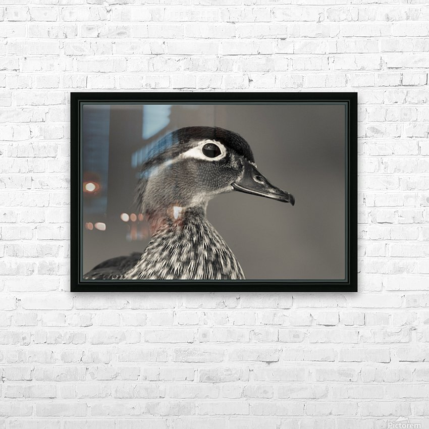 Wood Duck HD Sublimation Metal print with Decorating Float Frame (BOX)