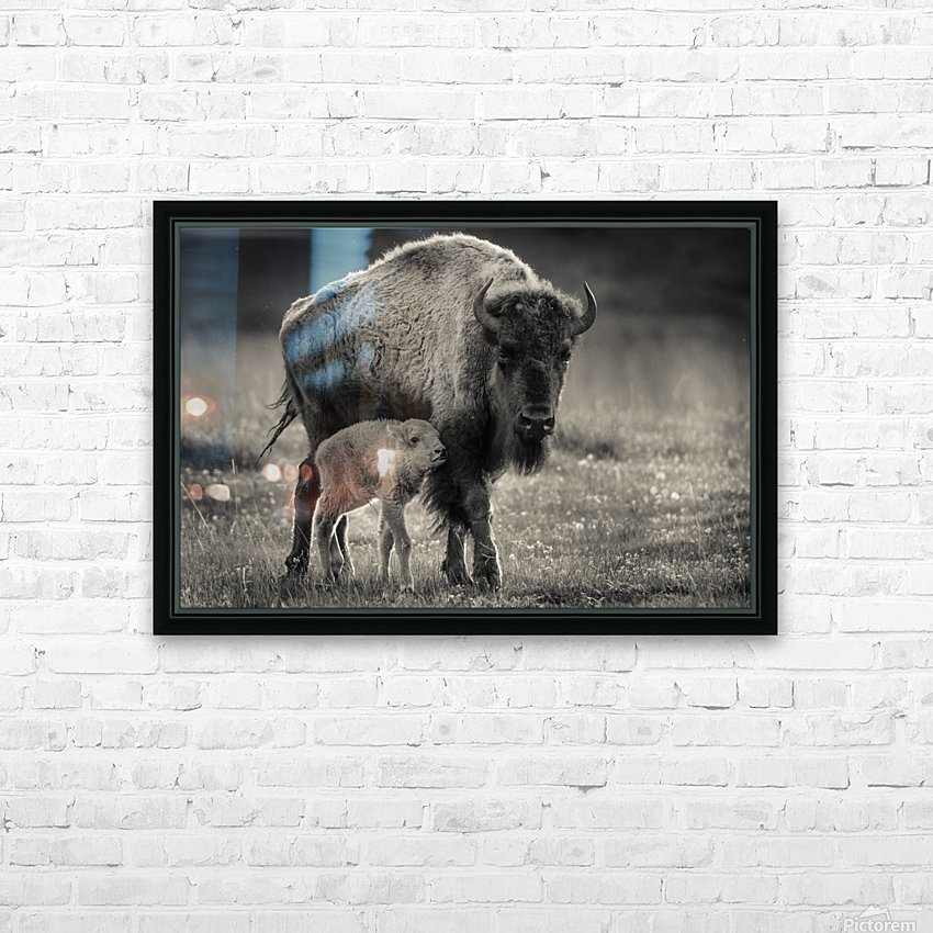 Bison love HD Sublimation Metal print with Decorating Float Frame (BOX)