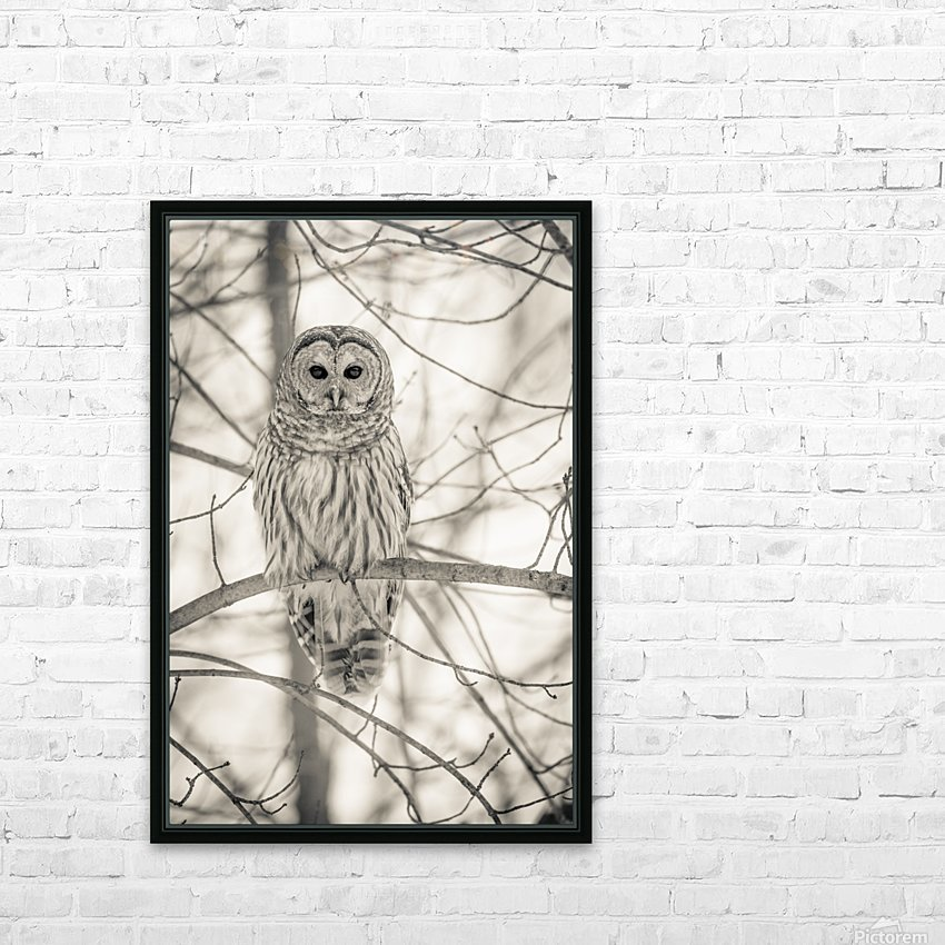 Spotted Owl - 1  HD Sublimation Metal print with Decorating Float Frame (BOX)