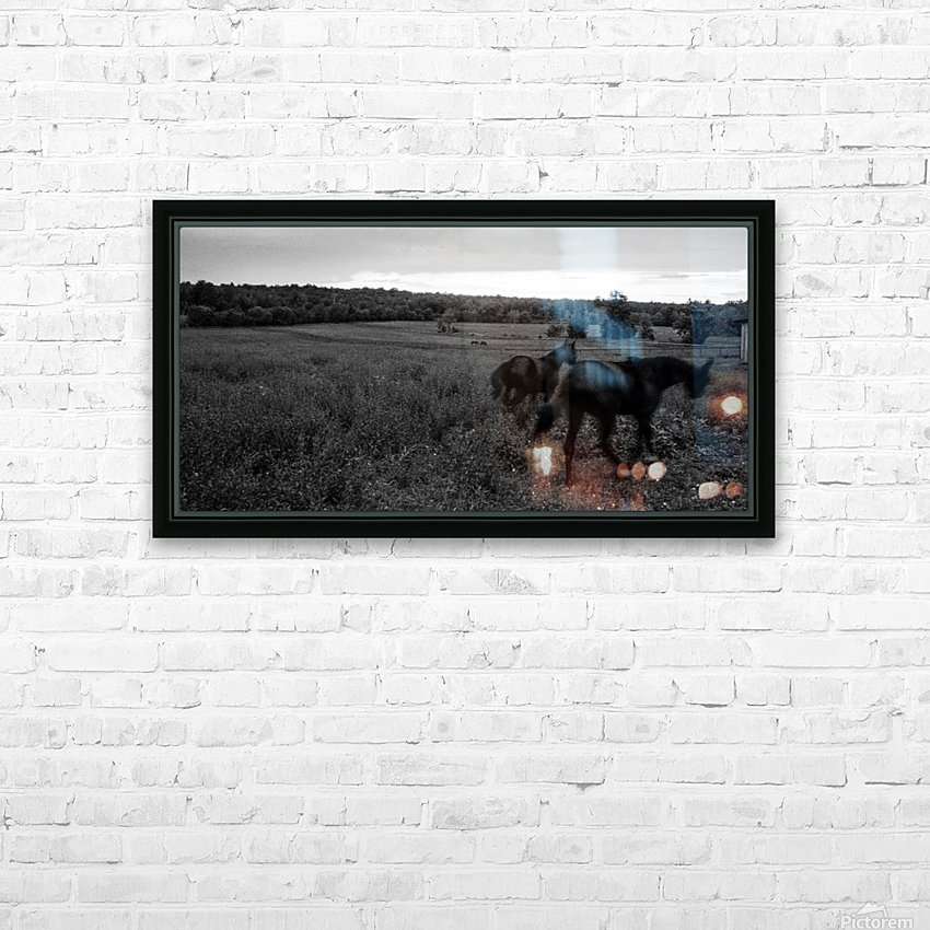 Horses in the Field HD Sublimation Metal print with Decorating Float Frame (BOX)