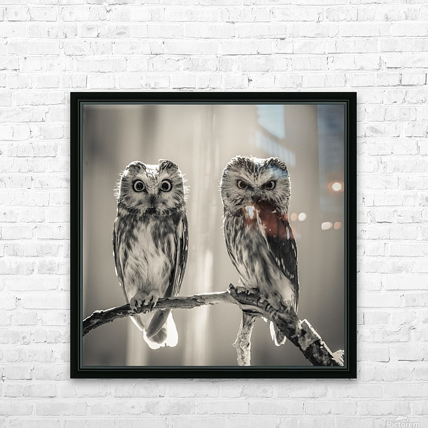 The Odd Couple - B&W HD Sublimation Metal print with Decorating Float Frame (BOX)