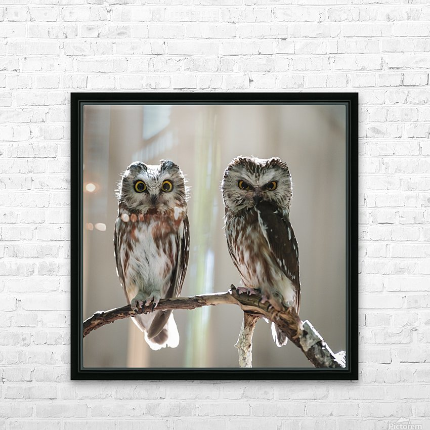 The Odd Couple - color HD Sublimation Metal print with Decorating Float Frame (BOX)