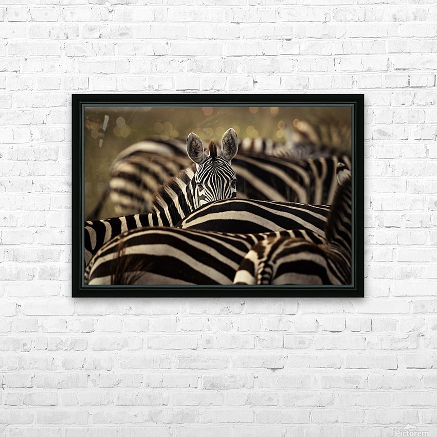 Between the Lines - Color by www.jadupontphoto.com HD Sublimation Metal print with Decorating Float Frame (BOX)