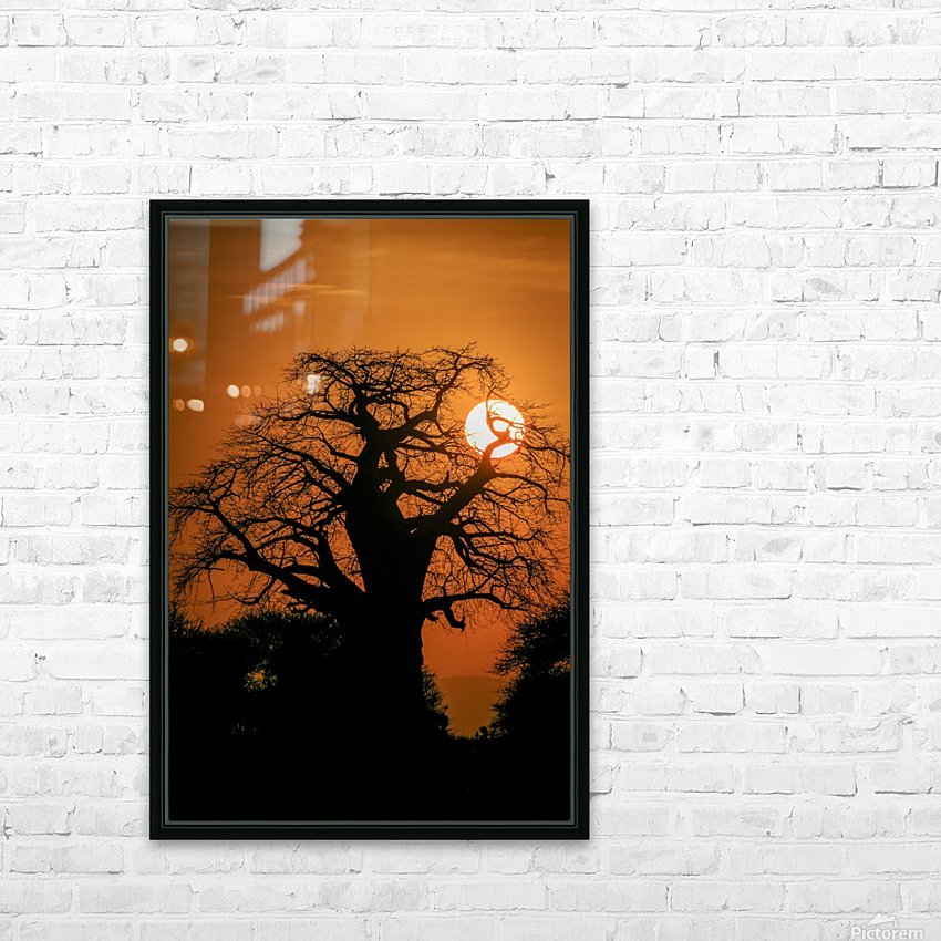 Baobab Sunset HD Sublimation Metal print with Decorating Float Frame (BOX)
