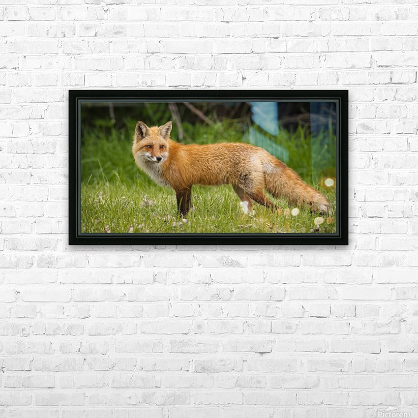 Red Fox Beauty HD Sublimation Metal print with Decorating Float Frame (BOX)