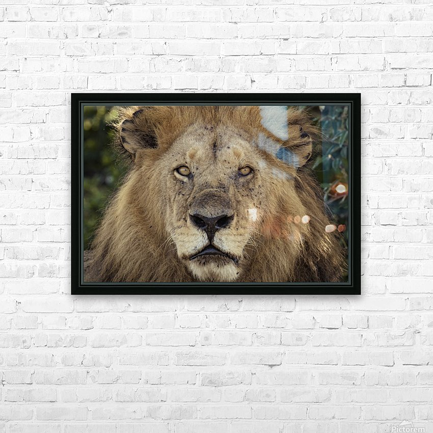 A Kings Portrait - color HD Sublimation Metal print with Decorating Float Frame (BOX)