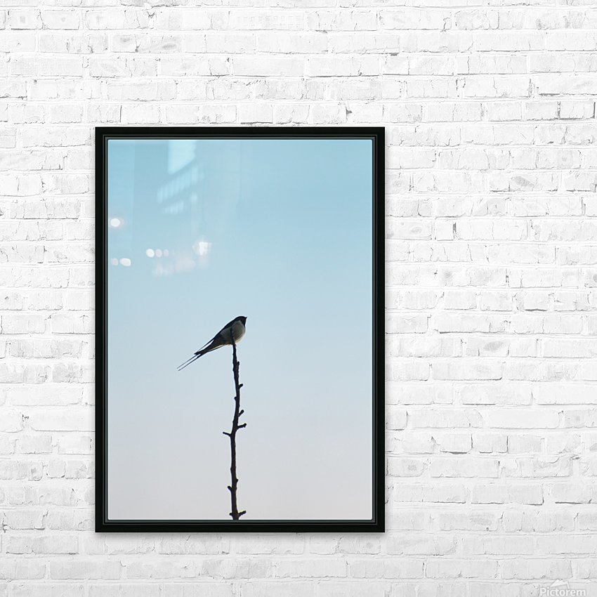 European Swallow HD Sublimation Metal print with Decorating Float Frame (BOX)