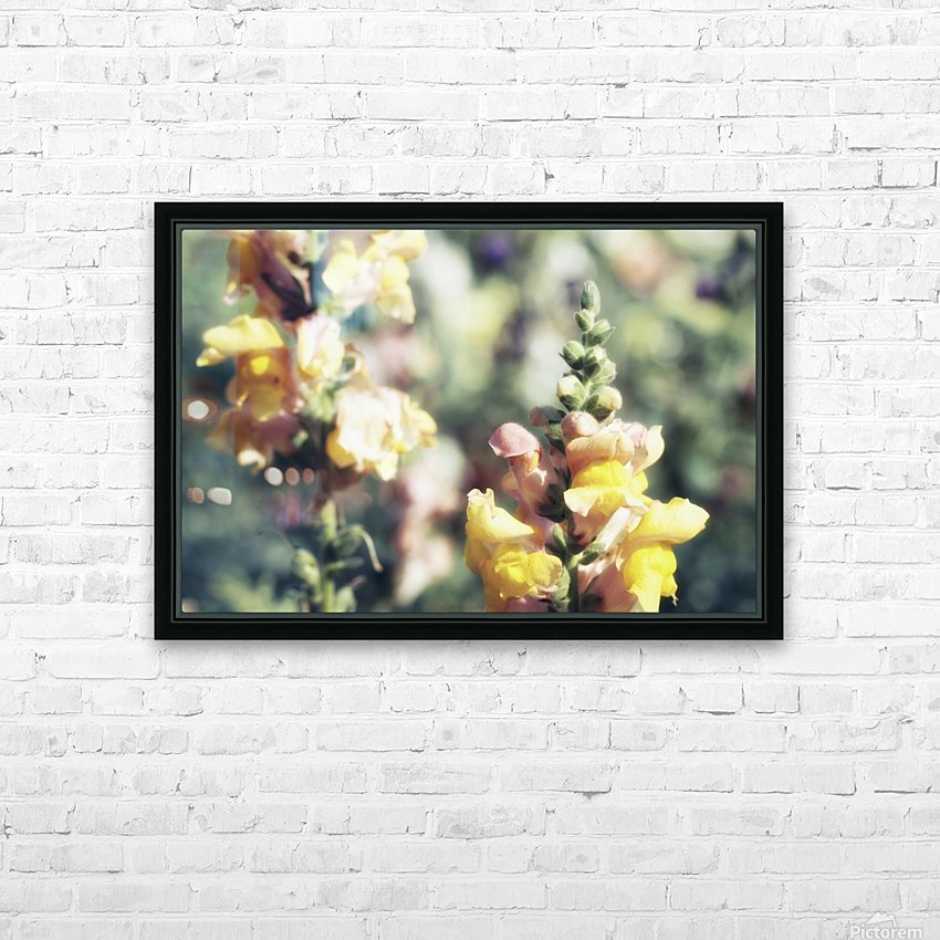 Lupinus Luteus Yellow HD Sublimation Metal print with Decorating Float Frame (BOX)