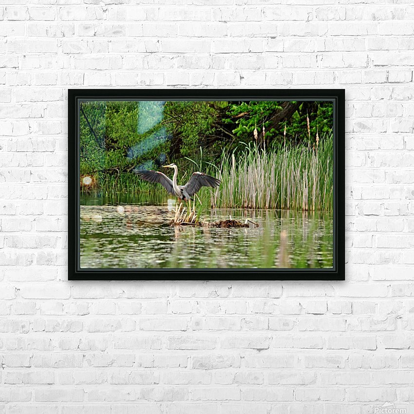 Great Blue Heron Landing HD Sublimation Metal print with Decorating Float Frame (BOX)