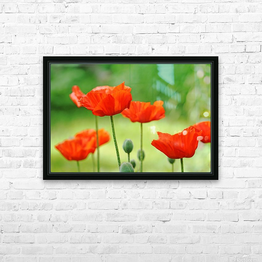 Morning Light Poppies HD Sublimation Metal print with Decorating Float Frame (BOX)