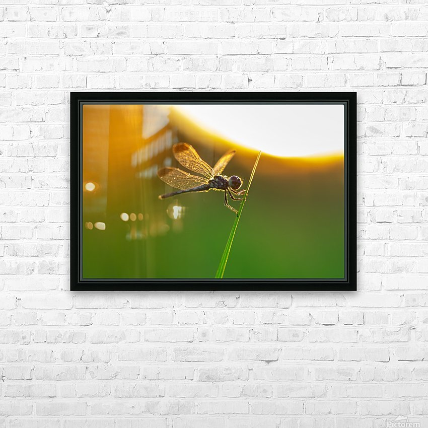 Dragonfly perching on grass twig HD Sublimation Metal print with Decorating Float Frame (BOX)