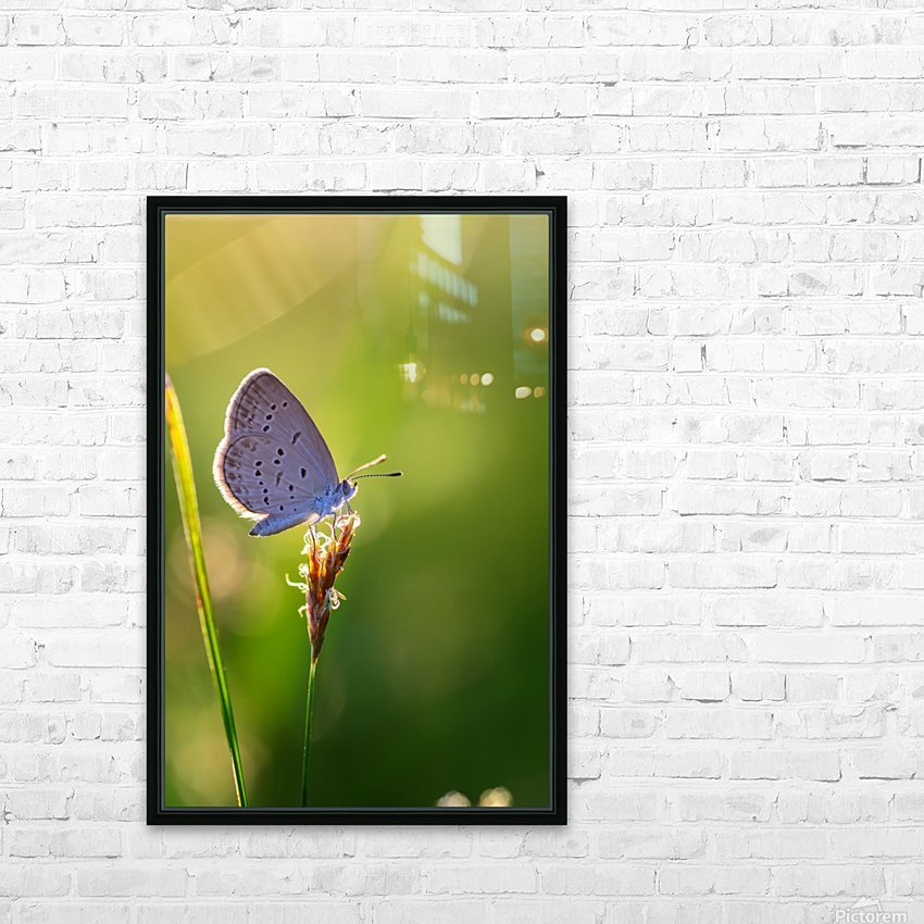 Gray butterfly perching on grass flower HD Sublimation Metal print with Decorating Float Frame (BOX)