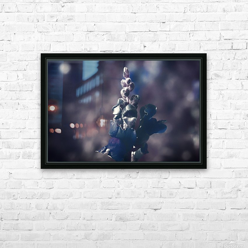 Lupinus luteus Dark Blue HD Sublimation Metal print with Decorating Float Frame (BOX)
