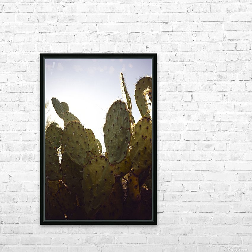 Saguaro Golden Hours 3 HD Sublimation Metal print with Decorating Float Frame (BOX)