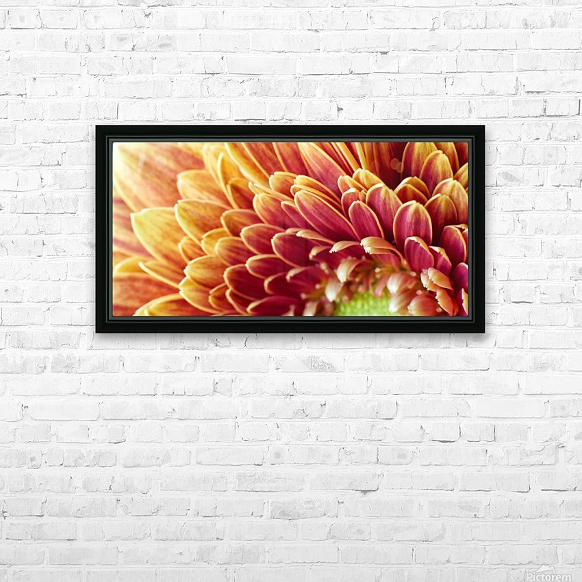 Golden Chrysanthemum HD Sublimation Metal print with Decorating Float Frame (BOX)