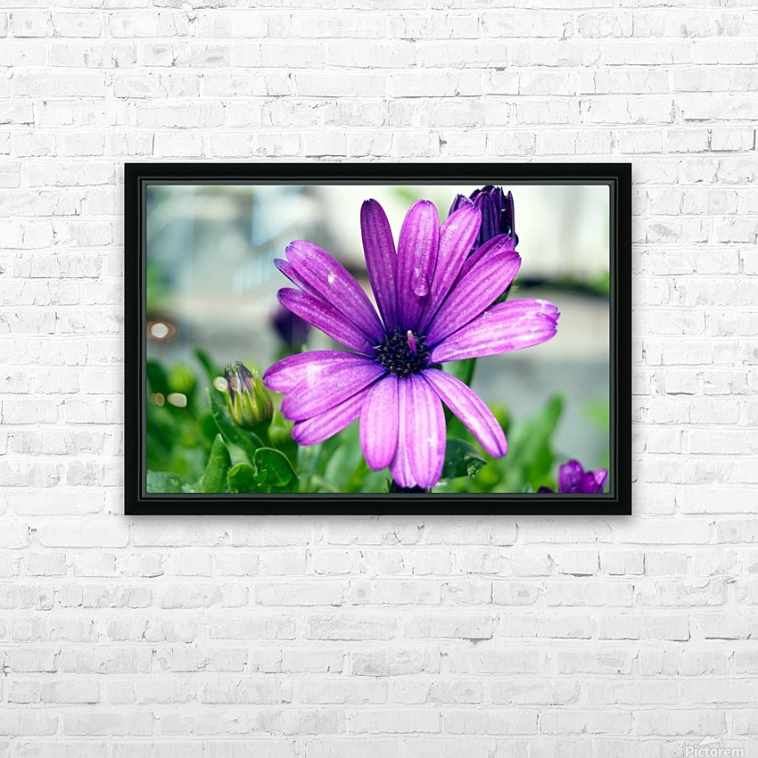 Waterdrop On Purple Flower HD Sublimation Metal print with Decorating Float Frame (BOX)