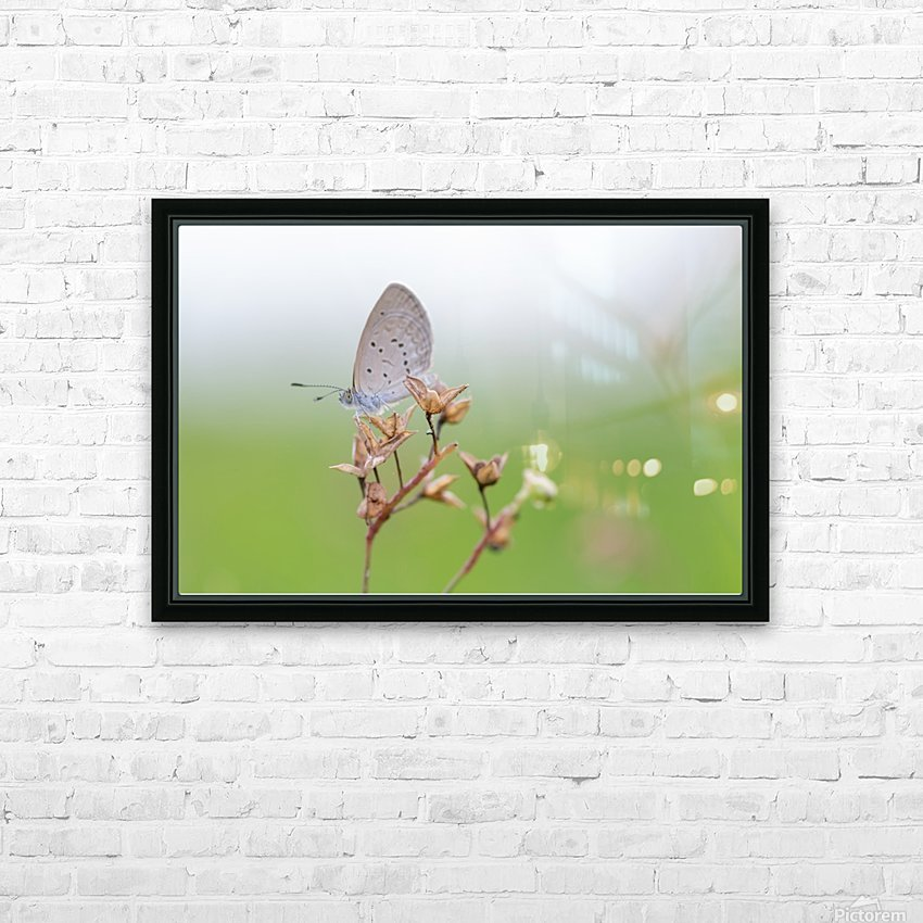 Gray butterfly perching on dried grass HD Sublimation Metal print with Decorating Float Frame (BOX)