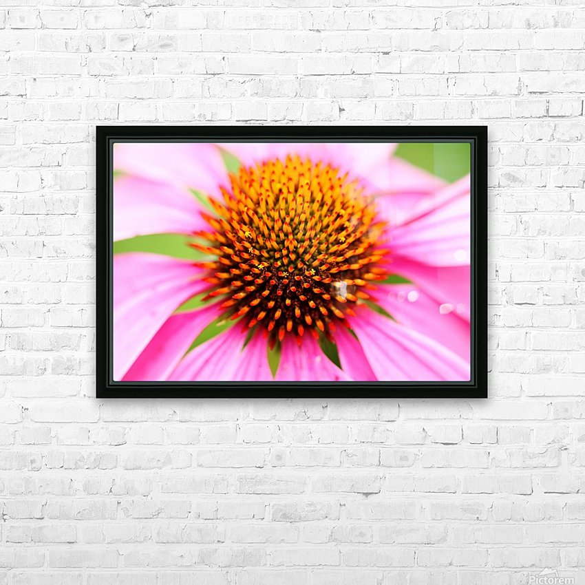 Hedgehog Coneflower HD Sublimation Metal print with Decorating Float Frame (BOX)