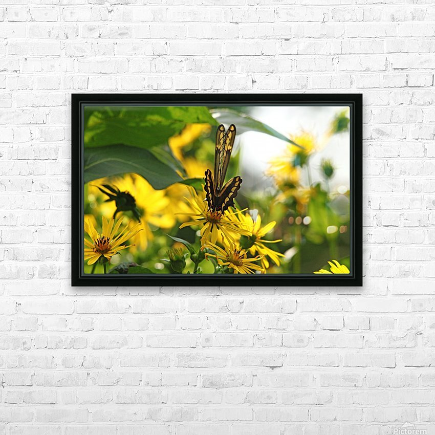 Giant Swallowtail Wings Folded HD Sublimation Metal print with Decorating Float Frame (BOX)