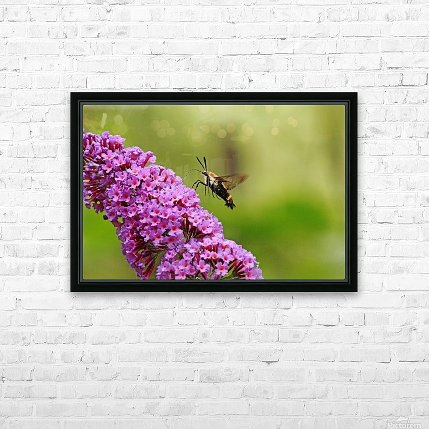 Hummingbird Moth Sipping Nectar HD Sublimation Metal print with Decorating Float Frame (BOX)