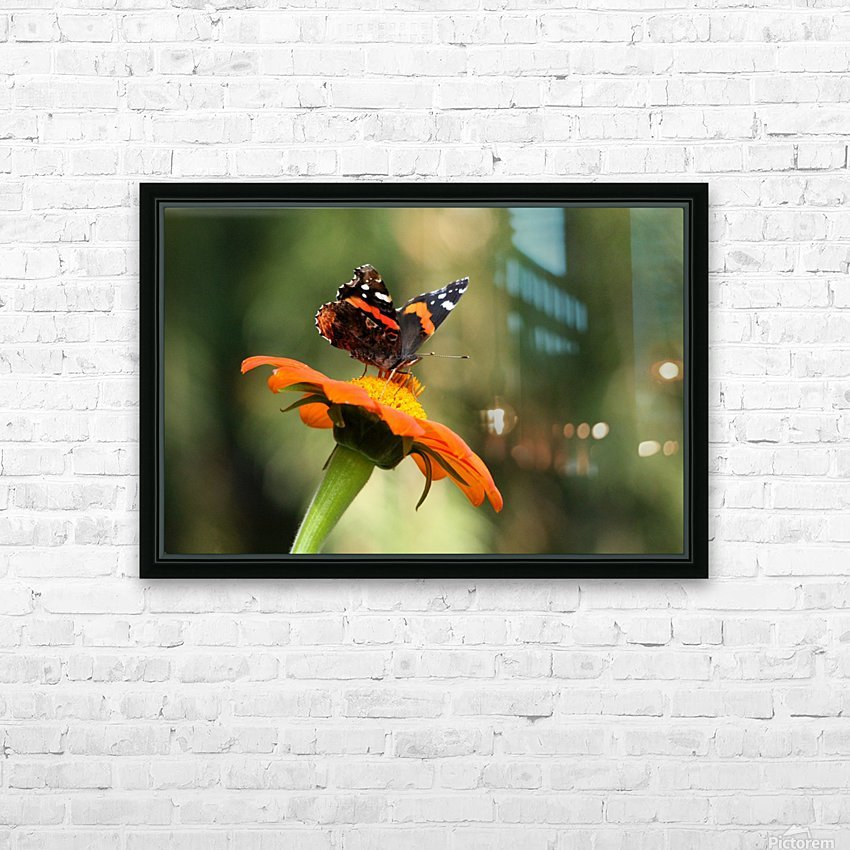 Mexican Sunflower With Red Admiral HD Sublimation Metal print with Decorating Float Frame (BOX)