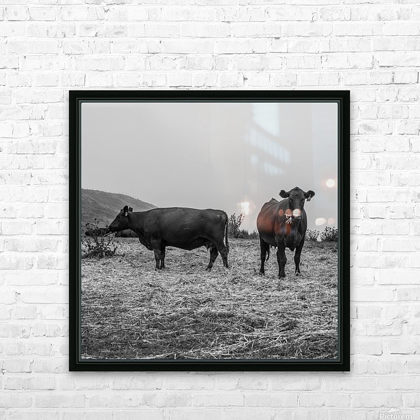 Cows in the mist HD Sublimation Metal print with Decorating Float Frame (BOX)