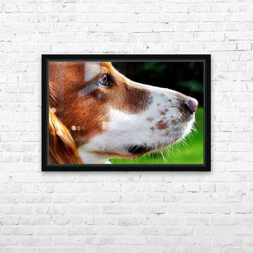 Cocker Spaniel Up Close HD Sublimation Metal print with Decorating Float Frame (BOX)