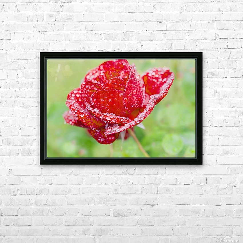 Raindrops and Roses HD Sublimation Metal print with Decorating Float Frame (BOX)
