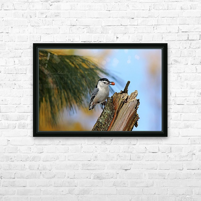 Nutty Nuthatch HD Sublimation Metal print with Decorating Float Frame (BOX)