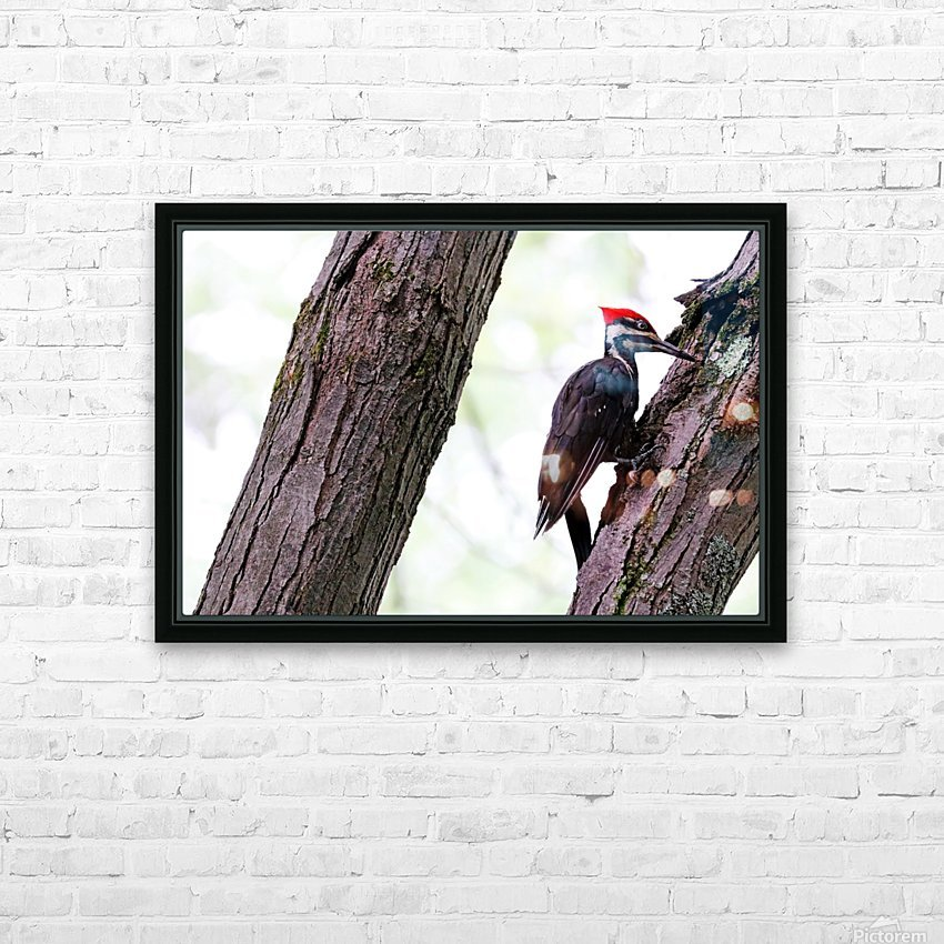 Pileated Woodpecker Checking The Cracks HD Sublimation Metal print with Decorating Float Frame (BOX)